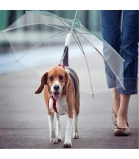 Ombrello per i cani