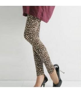 Leopard gambali